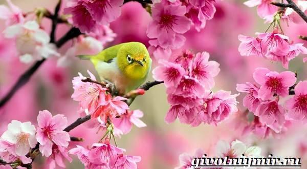Животные японии фото и названия