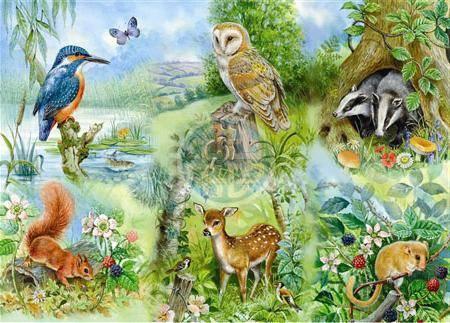 Объясните зачем люди изучают природу
