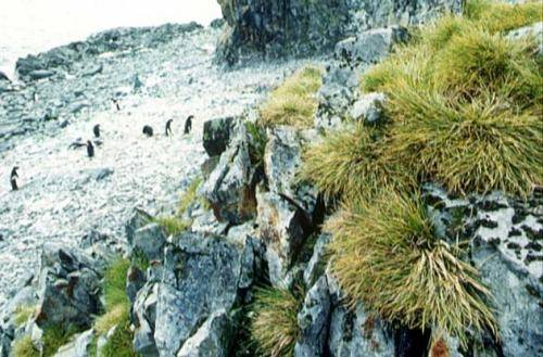 Растения антарктиды фото с названиями