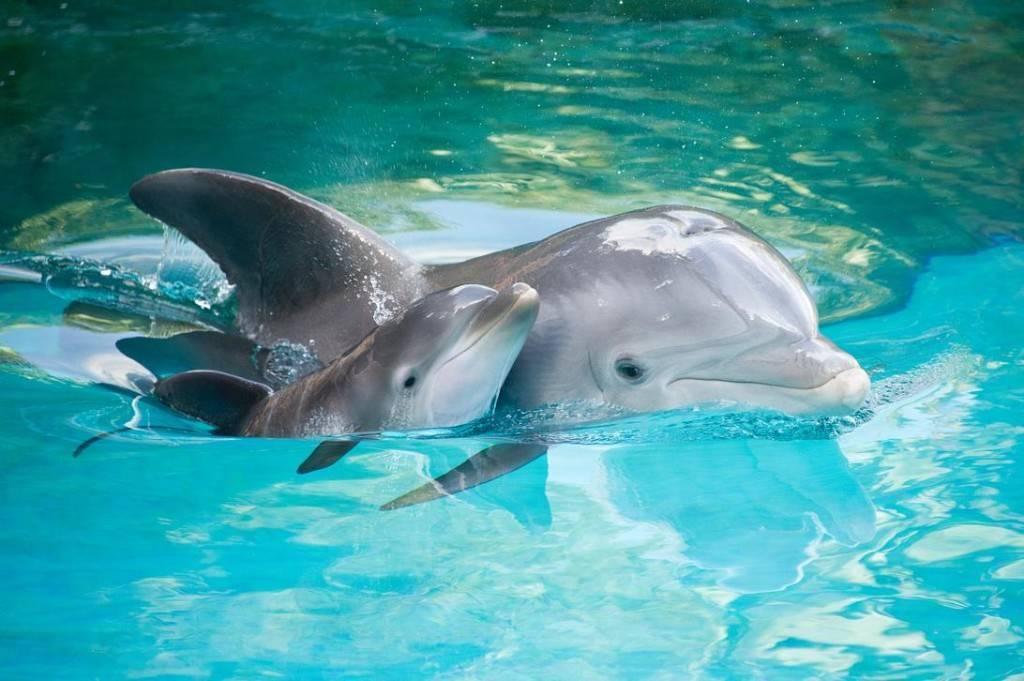 Дельфин млекопитающее животное или нет