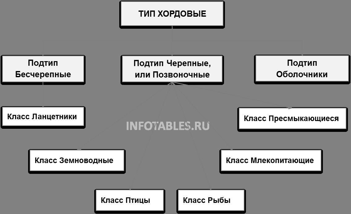 Классификация позвоночных животных