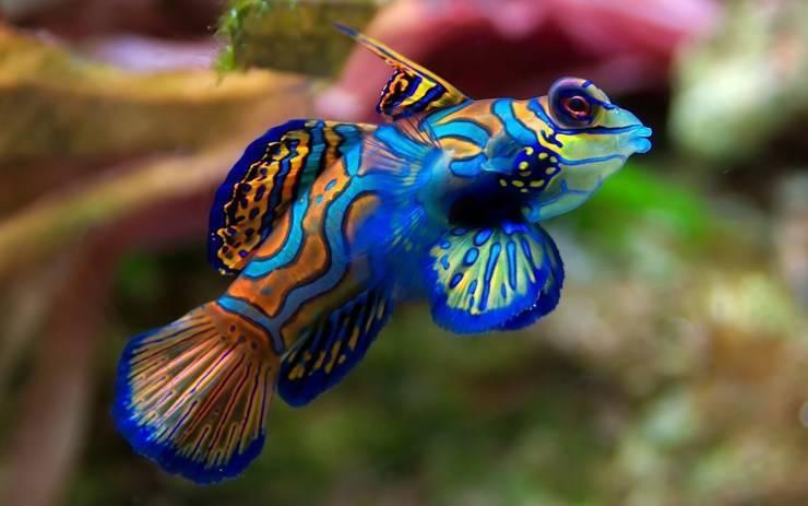 Самые красивые морские рыбы