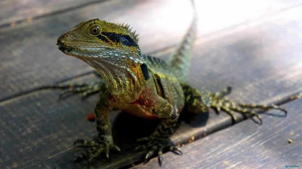Какие животные обитают в южной америке список