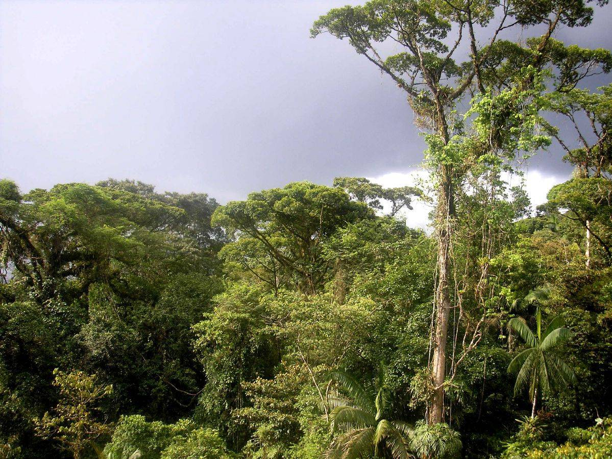 South American rainforest equatorial climate zone