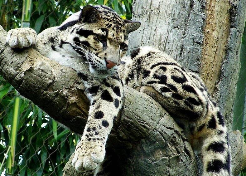 Животные семейства кошачьих список