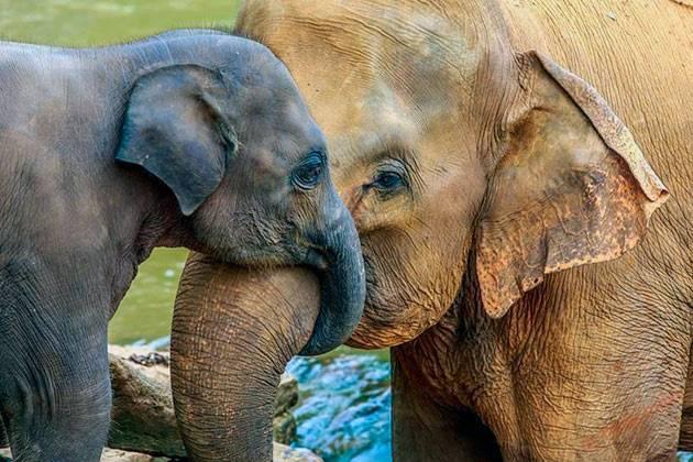 Средняя масса слона