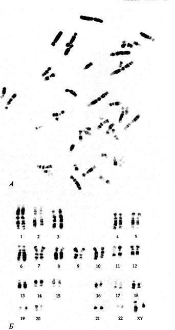 Многоклеточные прокариоты