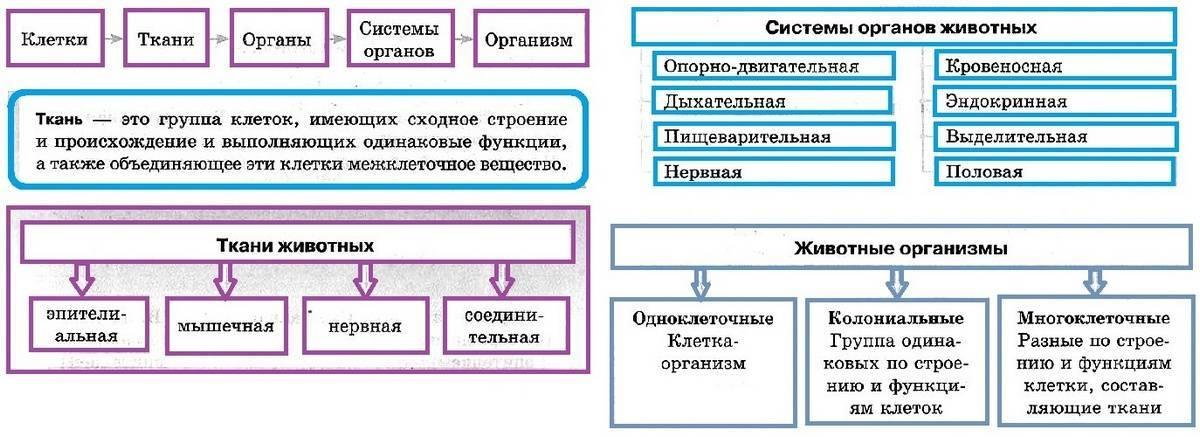 Классификация животного мира схема