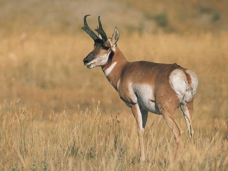 Какое животное самое быстрое на земле