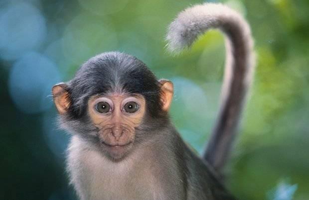 Сколько лет живут обезьяны