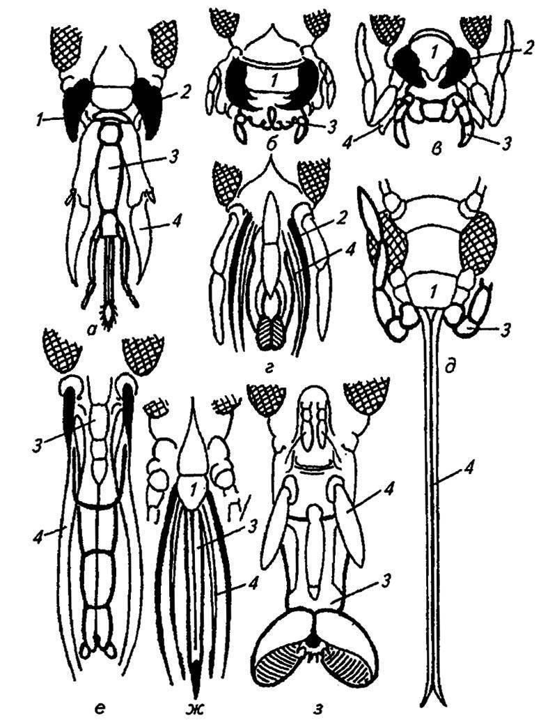 Мандибулы и максиллы
