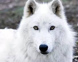 Фото животных арктических пустынь