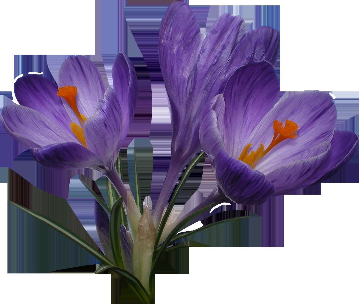 Самый опасный цветок в мире