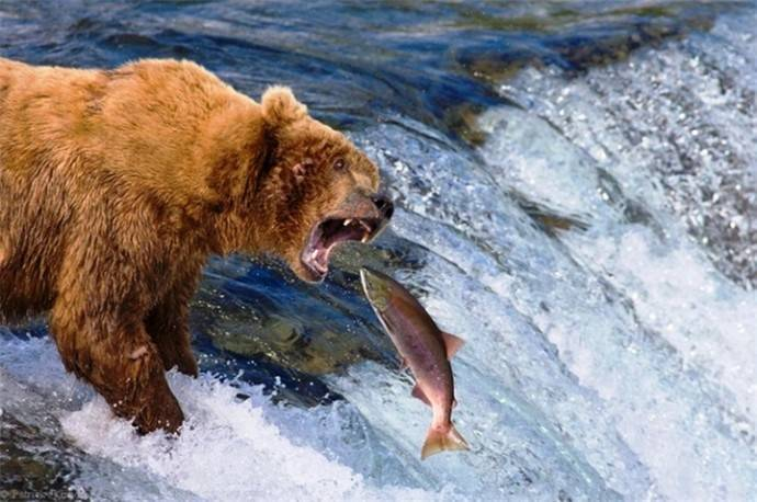Арктическая рыба