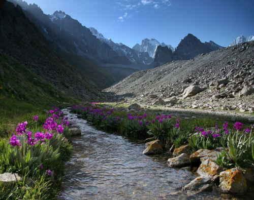 Растительный и животный мир казахстана