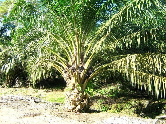 Растения саванны фото и названия