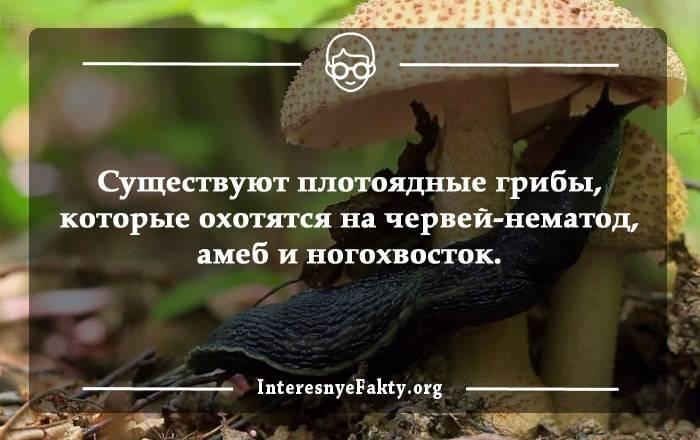 Интересная информация о грибах