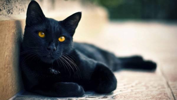 Кличка для черной кошки