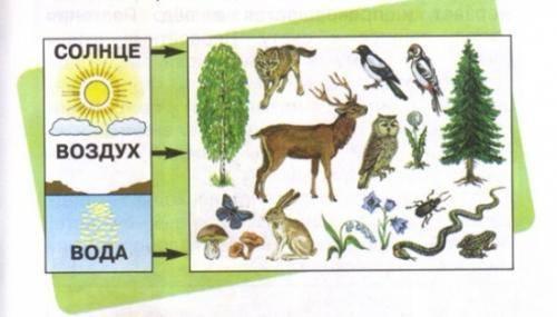 Объекты живой природы примеры 2 класс