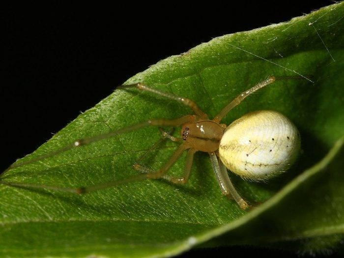 Отличие насекомых от паукообразных