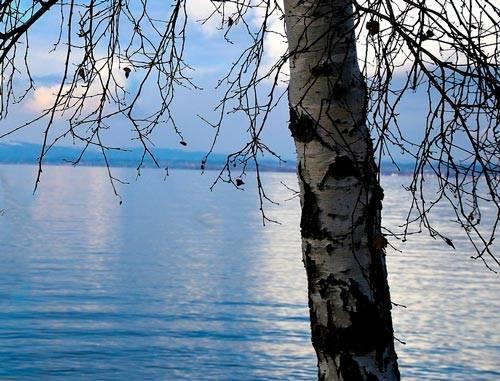 Сочинение описание дерева