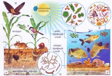 Составные части экосистемы