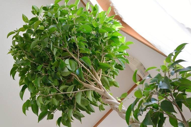 Какое дерево лучше очищает воздух