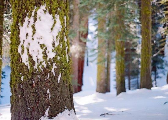 Текст описание зимний лес