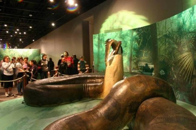 Самая большая змея в мире титанобоа