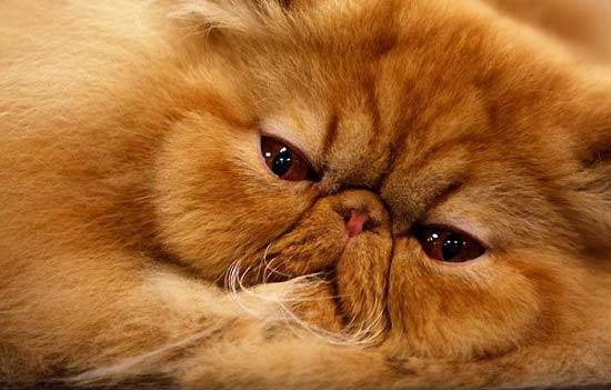 Игольчатая кошка