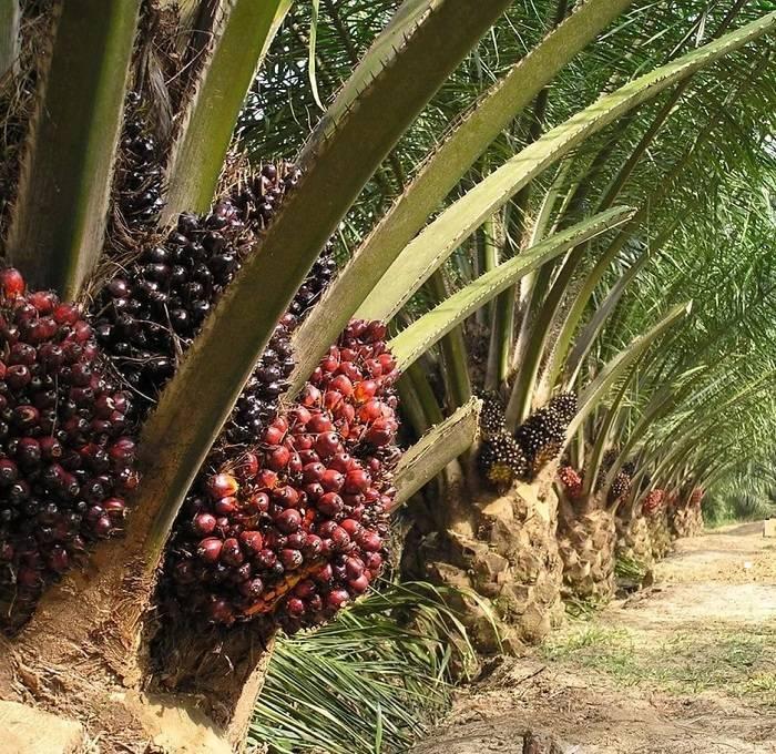 Деревья южной америки фото с названиями