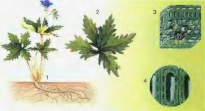 Природная система