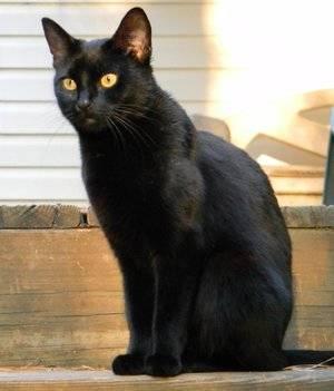 Имена для котов мальчиков черного цвета