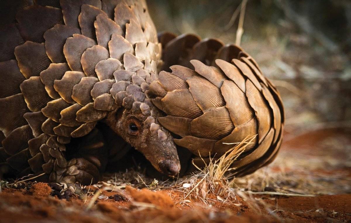 Фотографии редких животных