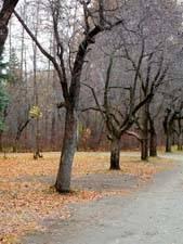 Отрывок из евгения онегина про осень