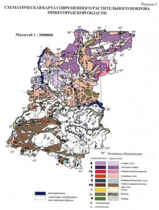 Экология лесных растений проект