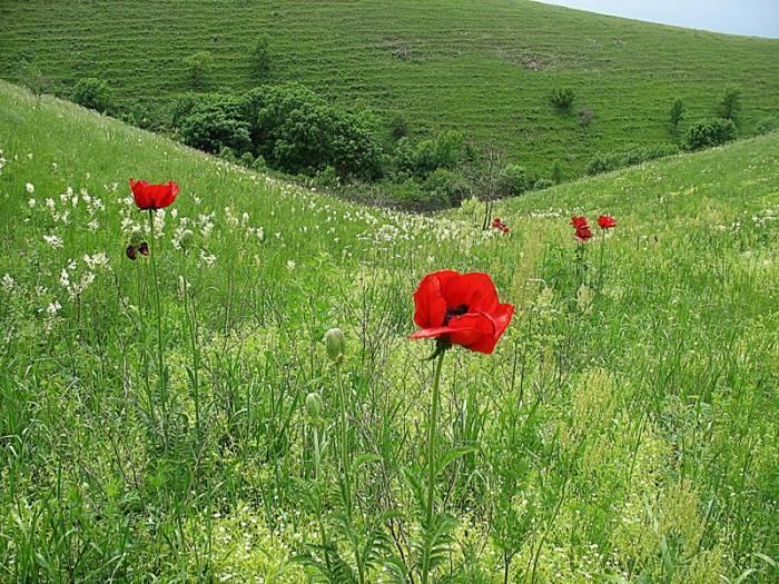 Виды растений занесенные в красную книгу россии