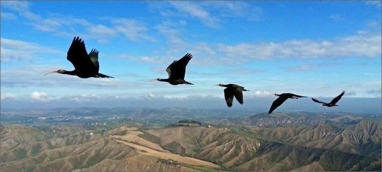 Осенние птицы названия