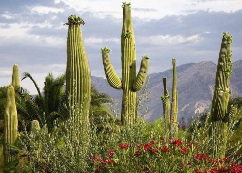 Почему кактусы выживают в условиях пустыни