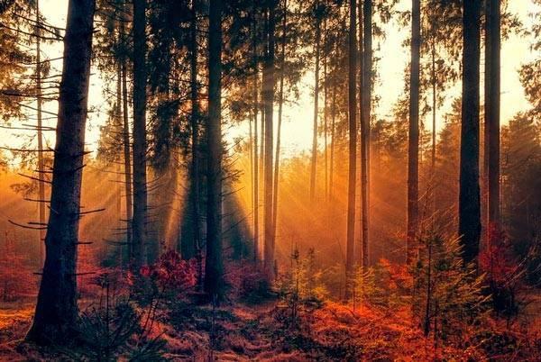 Уголок осеннего леса сочинение