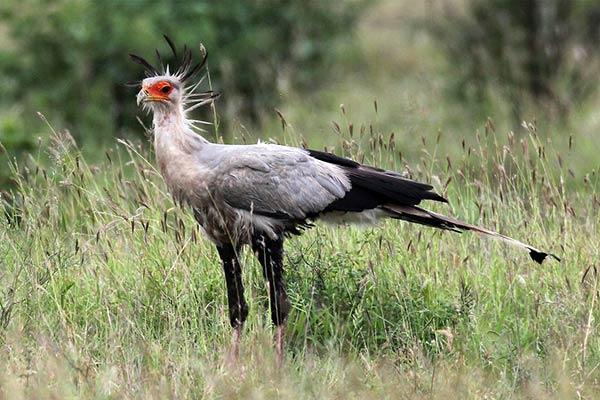 Птицы африки фото и названия