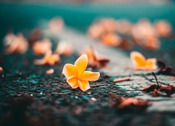 Сочинение по картине осень веранда