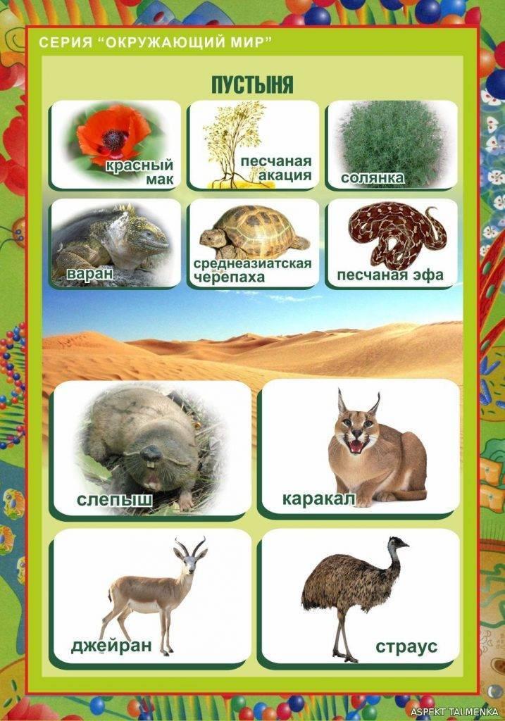 Сообщение о природной зоне пустыня