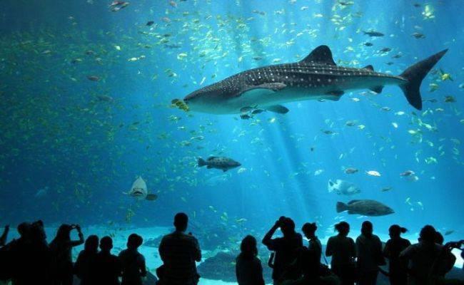 Сравнительная характеристика океанов