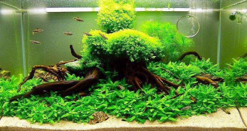 Природные и искусственные экосистемы