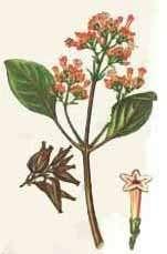 Растения южной америки список