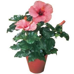 Полезные растения для человека