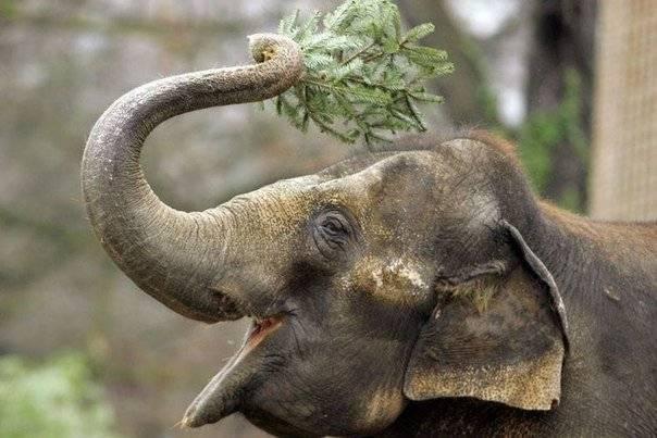 Про слона для детей