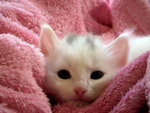 Лучшая порода кошек для детей в квартире