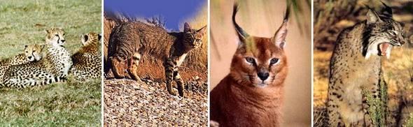 Названия хищных животных